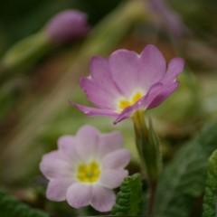 Fleurs cachées